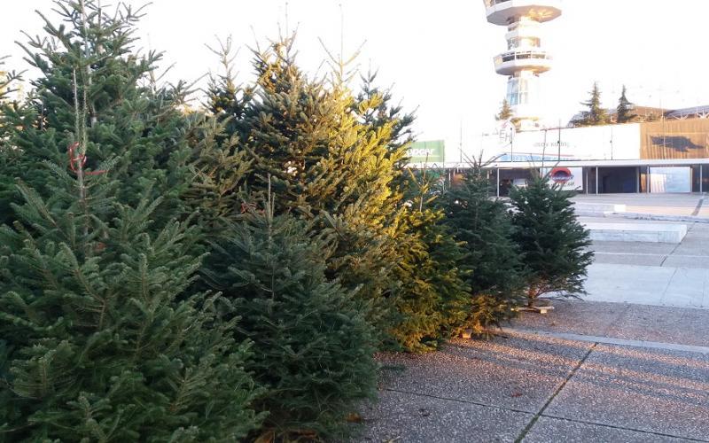 Ανακύκλωση φυσικών χριστουγεννιάτικων δέντρων
