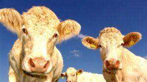 υπερκατανάλωση κρέατος