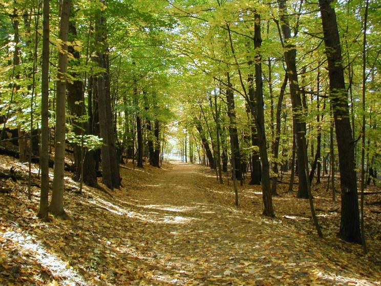 ΤΣΔ: Φρύγανα και ασπάλαθοι δεν αποτελούν δάση