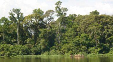 tropiko-dasos