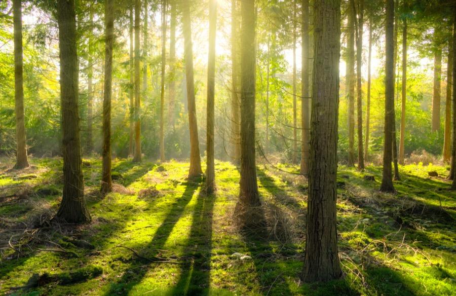 Δασικοί χάρτες: Λύση και στα Δωδεκάνησα