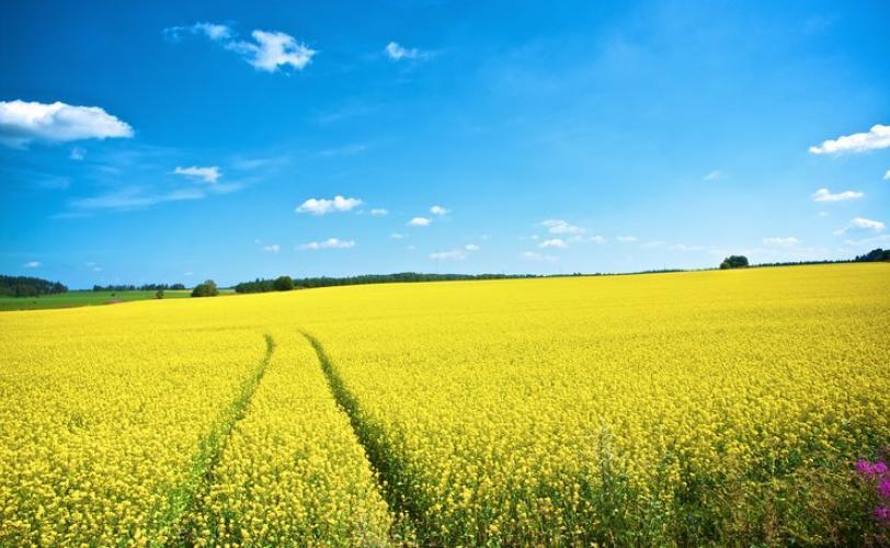 ΔΑΠΕΕΠ: Δεύτερη ευκαιρία στους εκπρόθεσμους αγρότες για διατήρηση της ιδιότητάς τους