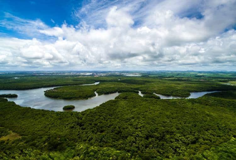 Θύμα της κλιματικής αλλαγής το δάσος του Αμαζονίου