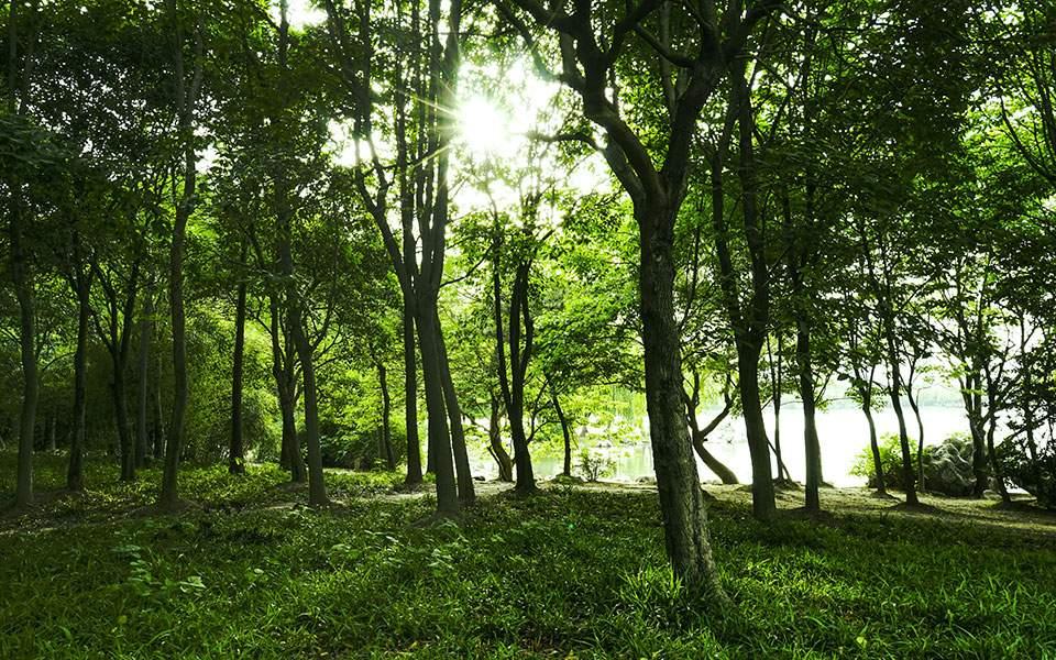 30 εκατομμύρια δέντρα με χρηματοδότηση από το Ταμείο Ανάκαμψης