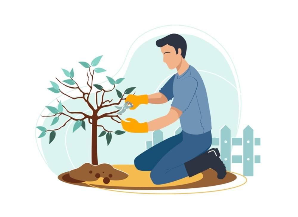 Απλοποιείται η διαδικασία για κλαδεύσεις και απομακρύνσεις δέντρων σε ιδιωτικές εκτάσεις, εκτός ορίων οικισμού